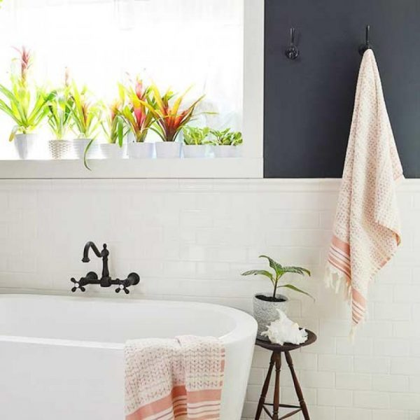 good plants for a bathroom