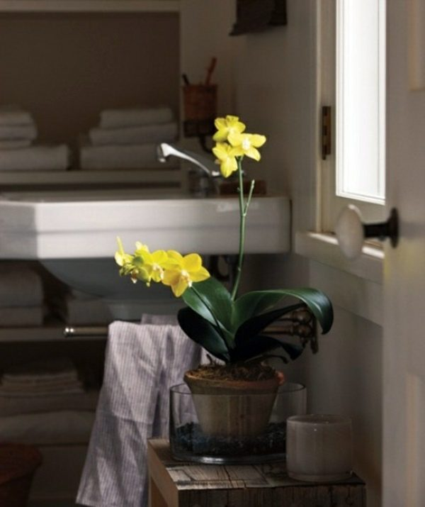 orchid bathroom decor