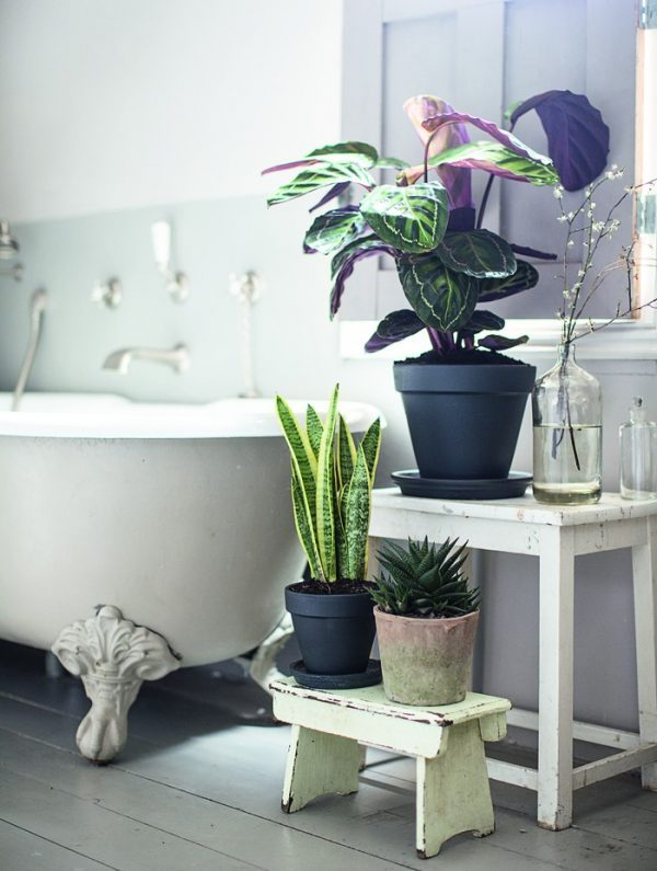 best bathroom plants