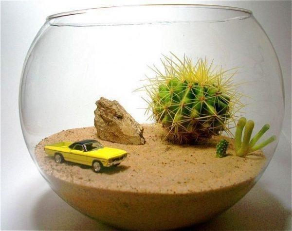 Ideas for glass terrariums