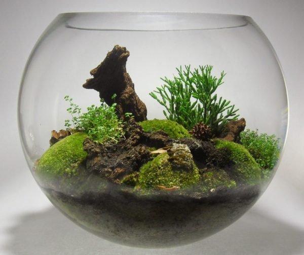 indoor moss garden terrarium