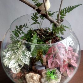 Make your miniature garden in a glass bowl: Ideas for glass terrariums