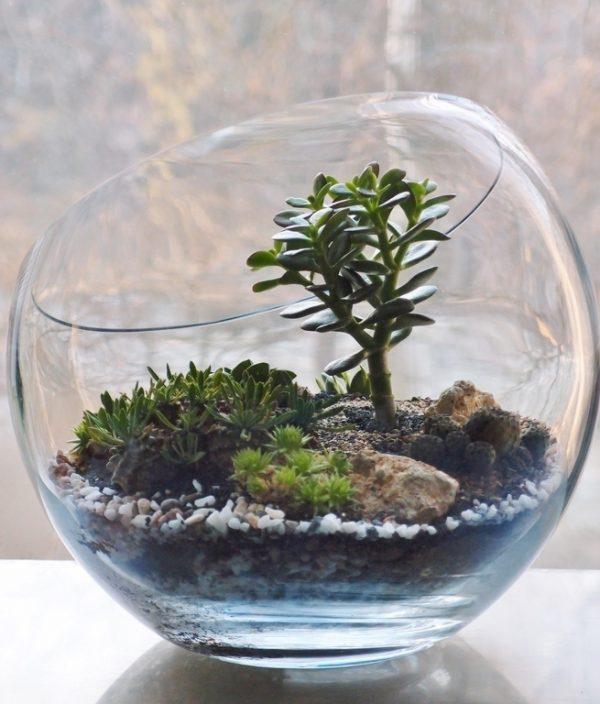decorative terrarium