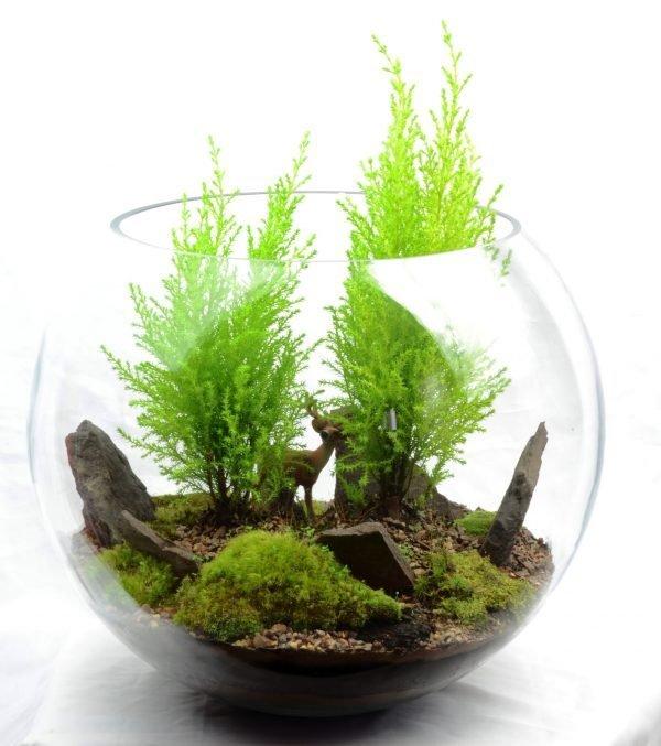 cool terrarium ideas