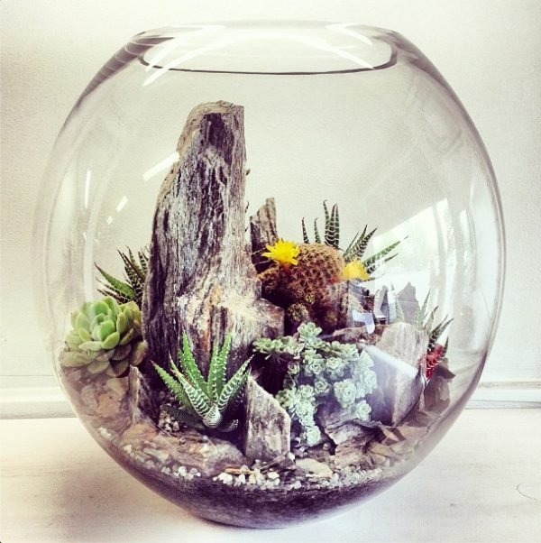 Make Your Miniature Garden In A Glass Bowl: Ideas For