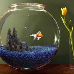 Creative fish bowl ideas