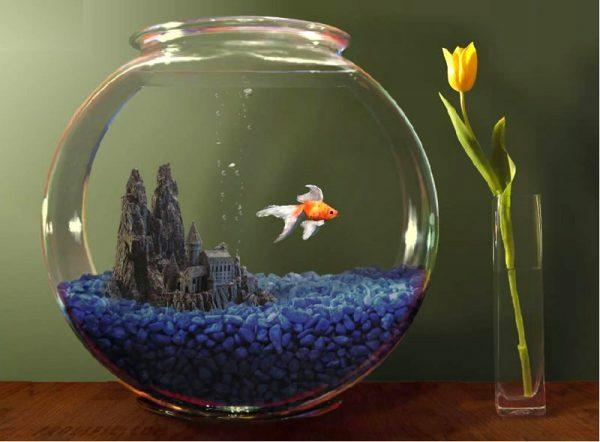 fish tank home decor