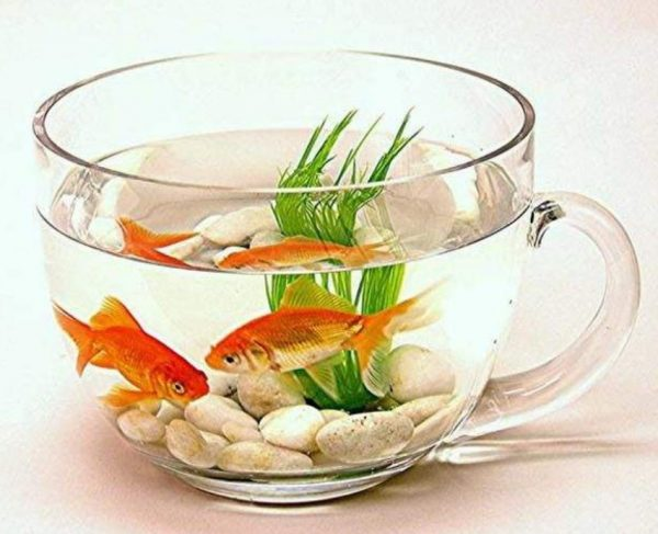 diy fish bowl ideas