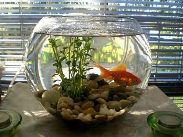 Creative fish bowl ideas little piece of me for How to make a fish bowl