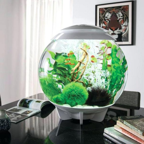 betta fish tank decor