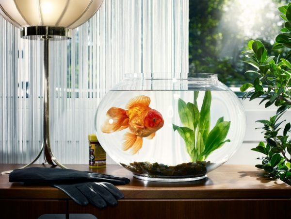 small aquarium design