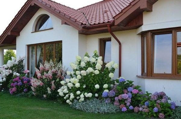 Hydrangea landscaping ideas