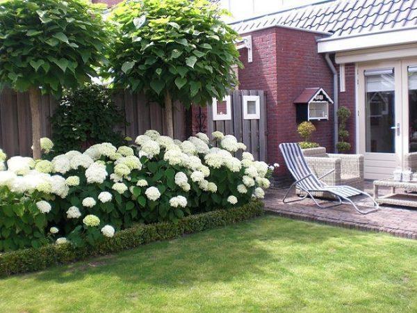 white blooming hydrangea