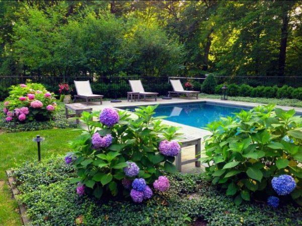 outdoor hydrangea