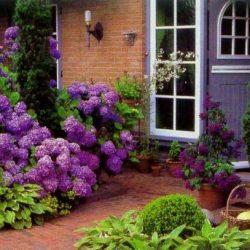 15 Hydrangea landscaping ideas