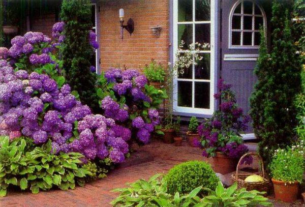 hydrangea garden ideas