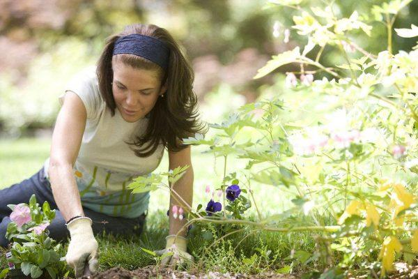 Avoiding the most common gardening mistakes – for beginners