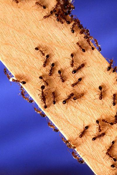 What You Need To Know About Pest Control