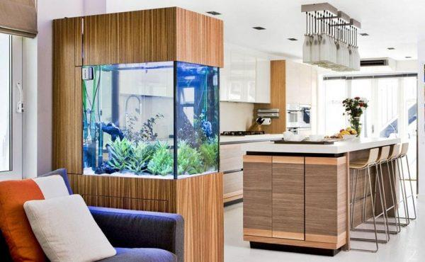 indoor fish aquarium