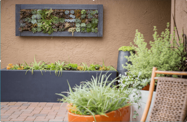 succulent wall frame