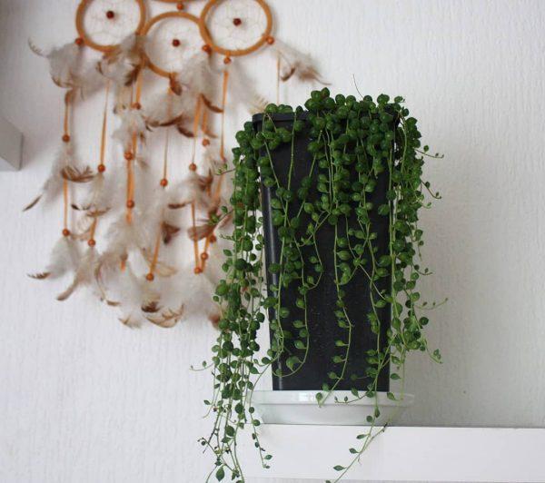 succulent home decor