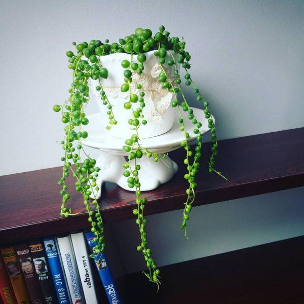 succulent room decor