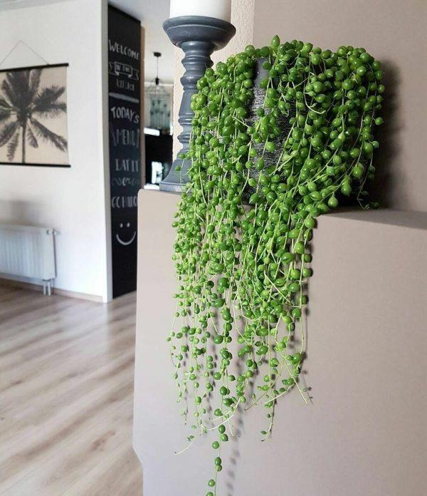 succulent plant decor