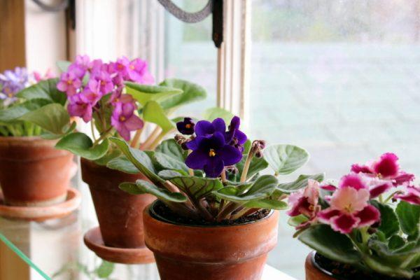 How to take care of indoor plants in winter