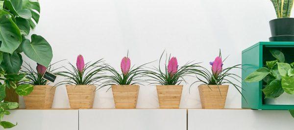 pretty office plants 1