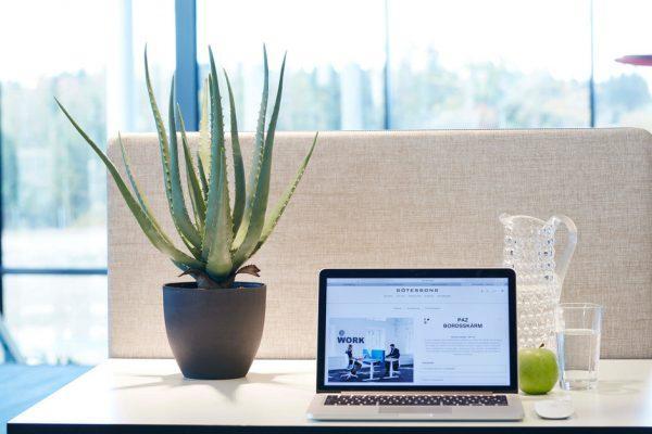 best indoor office plant