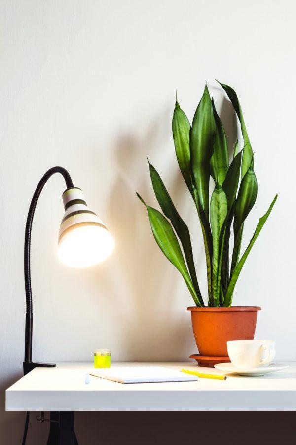 best plants for indoor office