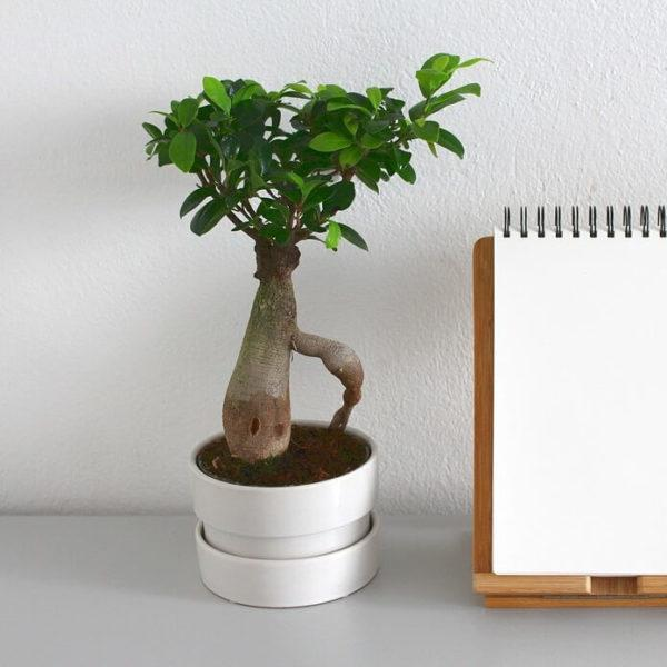 potted plants for office