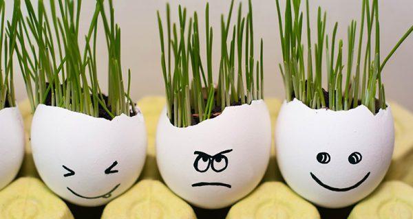 egg shells for crafts