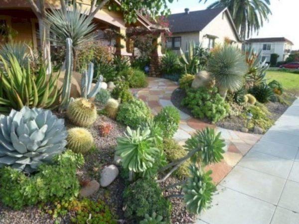 Cactus and succulent gardens 2