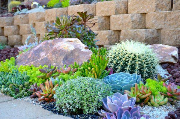 cacti and succulent gardens