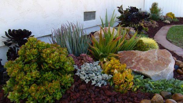 cacti and succulent garden ideas