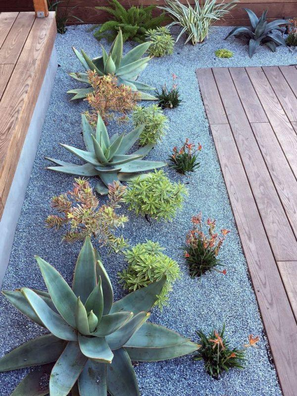 cacti and succulent garden ideas 1