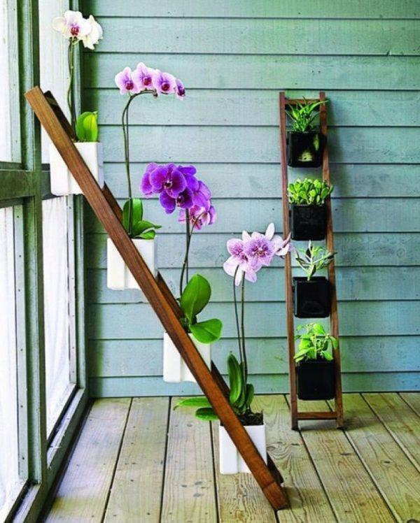 orchid plant care indoors