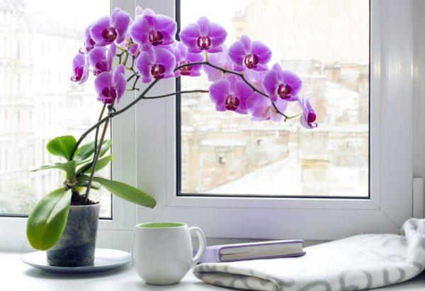 orchid plant care indoor