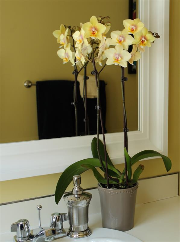 orchid plant indoor