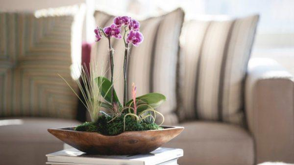 orchid plant home decor