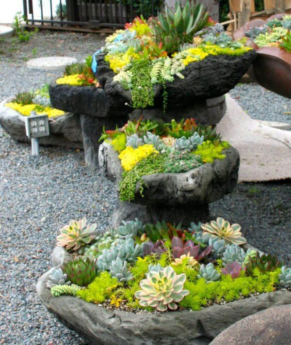 succulent plants for rock gardens