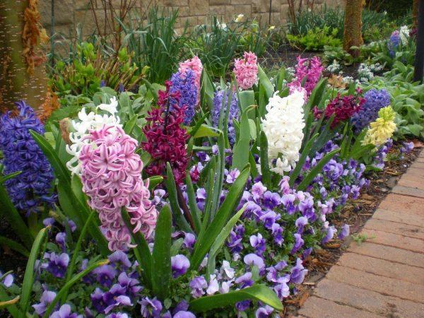 hyacinth garden
