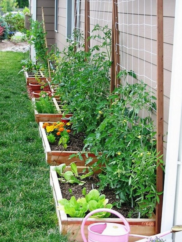 Beautiful vegetable garden designs