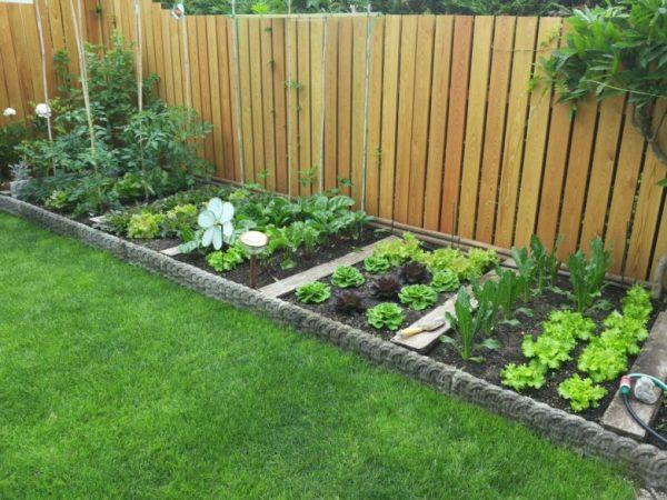 vegetable garden ideas at home