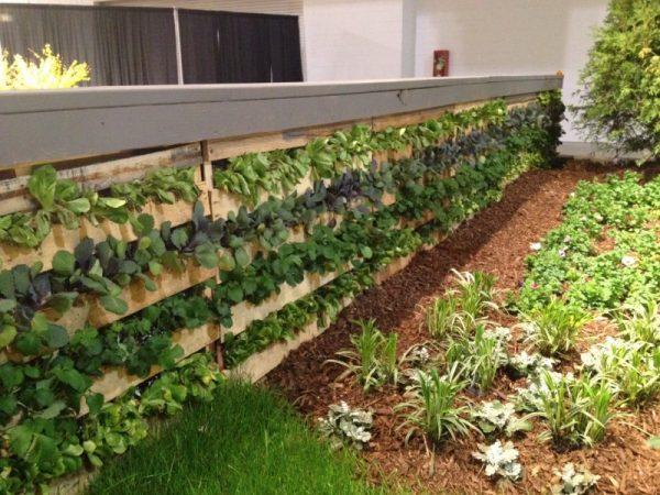 cheap vegetable garden ideas