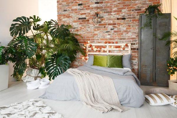 large leaf tropical plants indoor