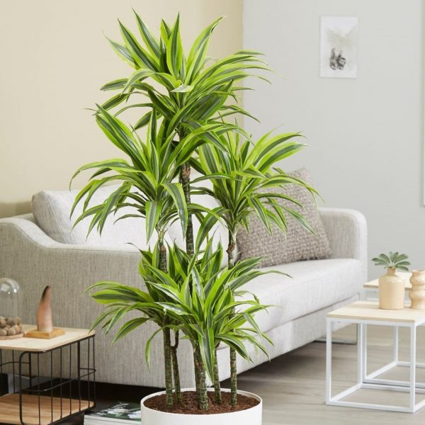 variegated tropical house plants