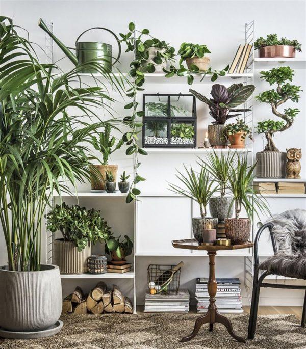 best tropical indoor plants