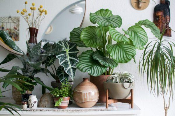 tropical potted plant ideas